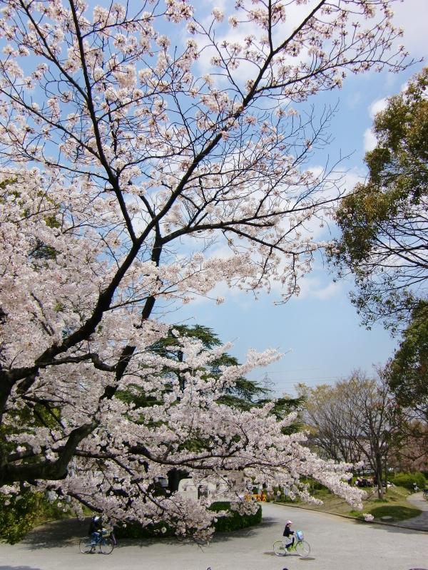 桜 2010-2