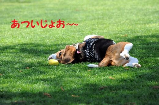 DSC20130601_2689S520.jpg
