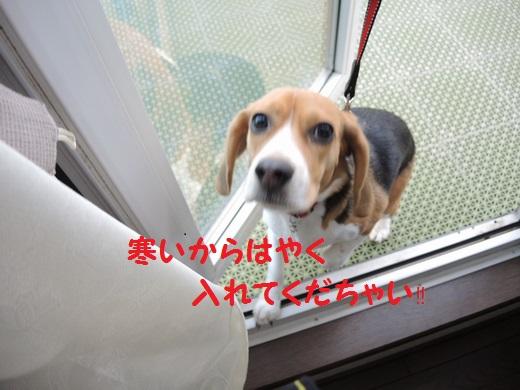 DSCN20130509_0211S520.jpg