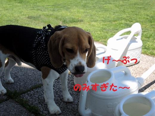TDSCN20130601_0522S520.jpg