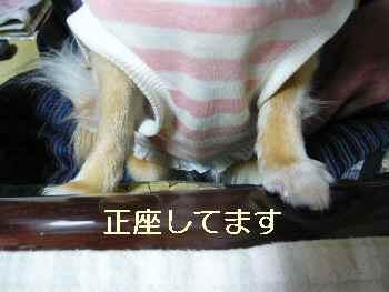 blog20100304007.jpg