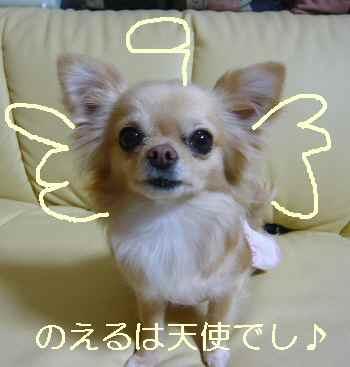 のえる天使♪