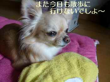 blog2010031001.jpg