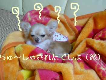 blog2010031201.jpg