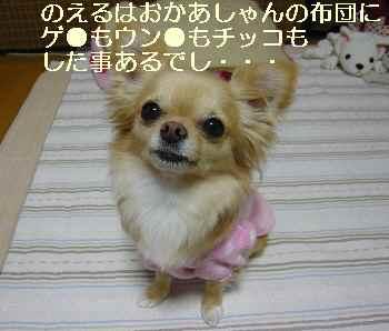 blog2010031503.jpg