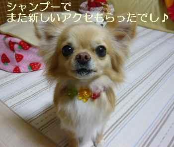 blog2010031602.jpg