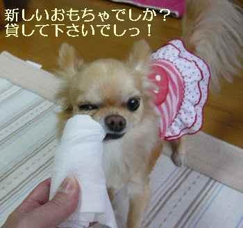 blog2010040103.jpg