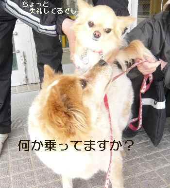 blog2010040403.jpg
