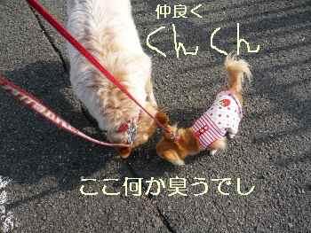 blog2010040601.jpg