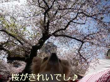 blog2010041004.jpg
