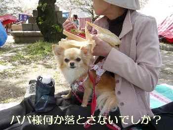 blog2010041006.jpg
