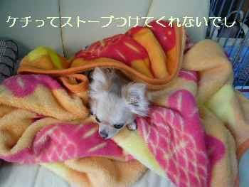 blog2010041703.jpg