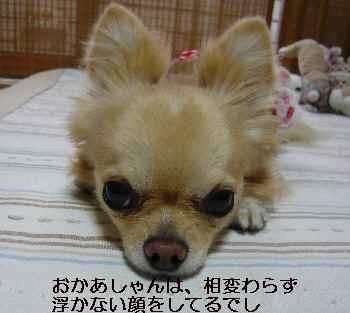 blog2010041801.jpg