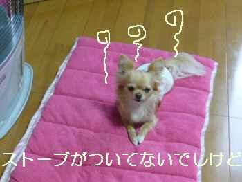 blog2010042002.jpg