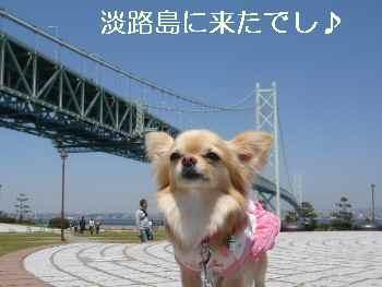 のえる IN 淡路島っ!