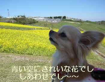 blog2010042508.jpg