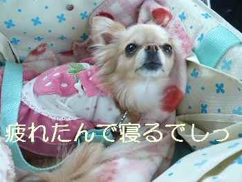 blog2010042515.jpg