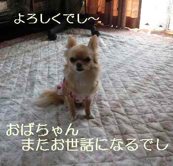 blog2010042801.jpg