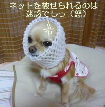 blog2010043003.jpg