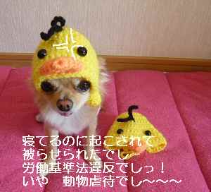 blog2010120204.jpg