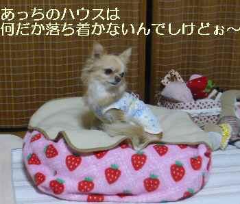 blog2010120505.jpg