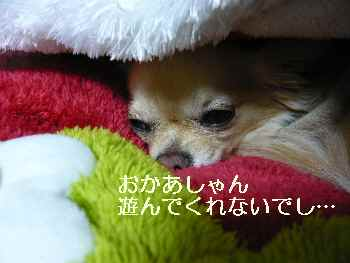 blog2011010701.jpg