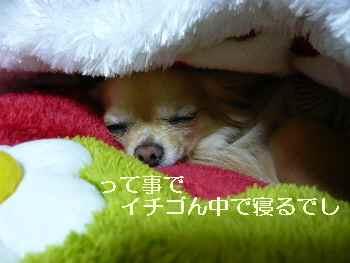 blog2011010702.jpg