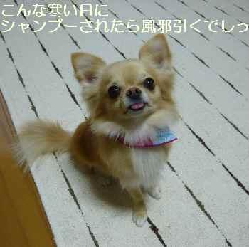 blog2011011301.jpg