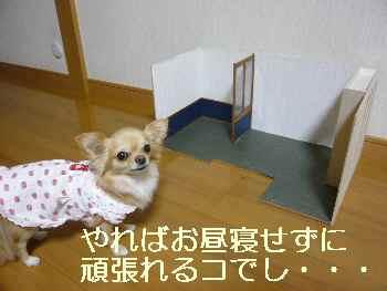blog2011011603.jpg
