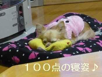 blog2011011802.jpg