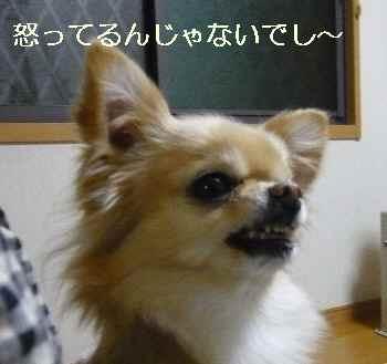 blog2011012710.jpg