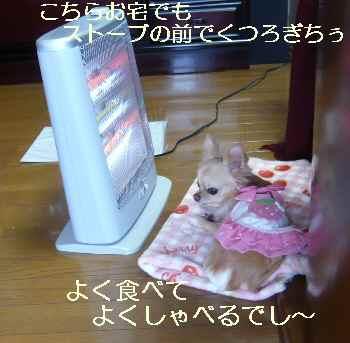 blog2011020903.jpg
