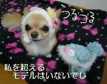 blog2011021401.jpg