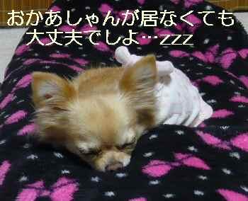 blog2011021510.jpg