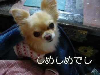 blog2011021805.jpg