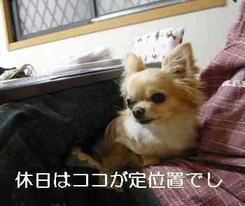 blog2011022701.jpg