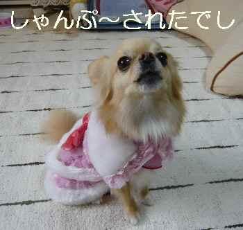 blog2011030203.jpg