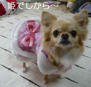 blog2011030204.jpg