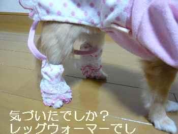 blog2011030407.jpg