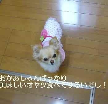blog2011030602.jpg