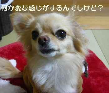 blog2011030704.jpg