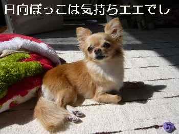 blog2011030801.jpg