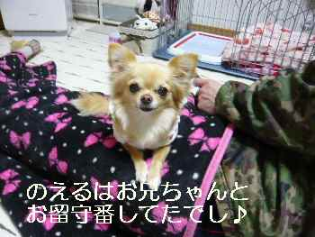blog2011030902.jpg