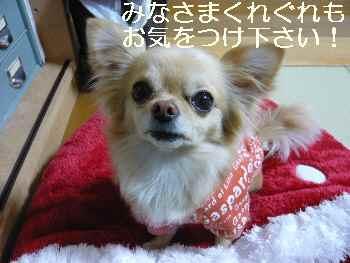 blog2011031101.jpg