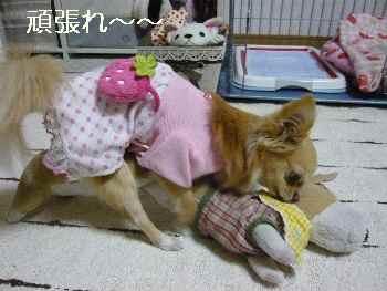 blog2011031404.jpg