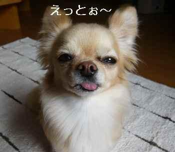 blog2011031501.jpg