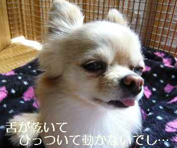 blog2011031502.jpg