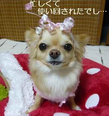 blog2011031802.jpg