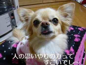 blog2011032002.jpg