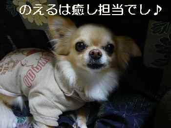 blog2011032202.jpg